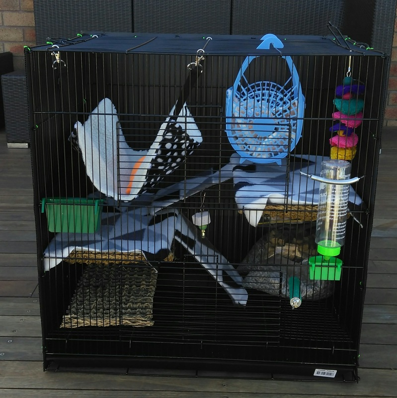 Products - Baby pet rats for sale, Geelong Victoria